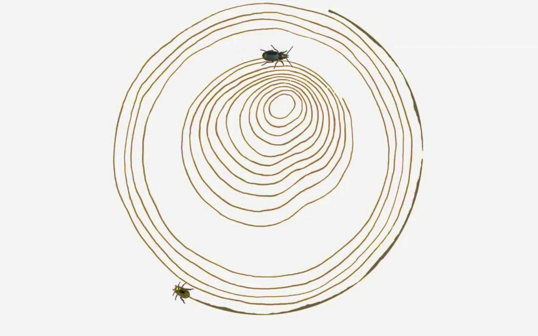 Foley & Sounddesign for Beetle Clock a short animation by Studio Wieki Somers
